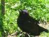 crazy_grackle