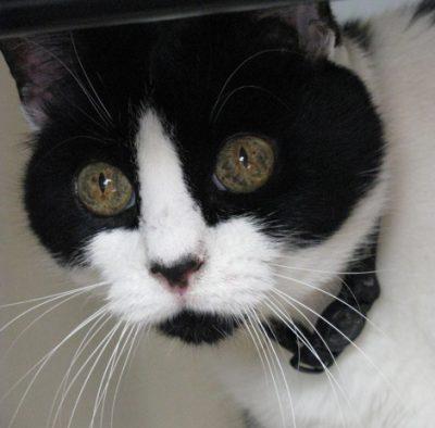 Missy Kat Closeup
