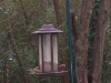 male_finches2