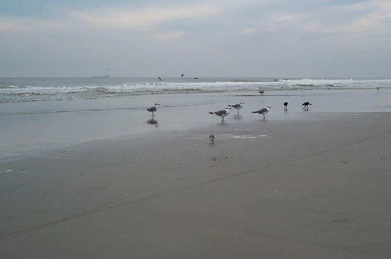 beach_birds1