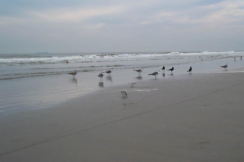 beach_birds2