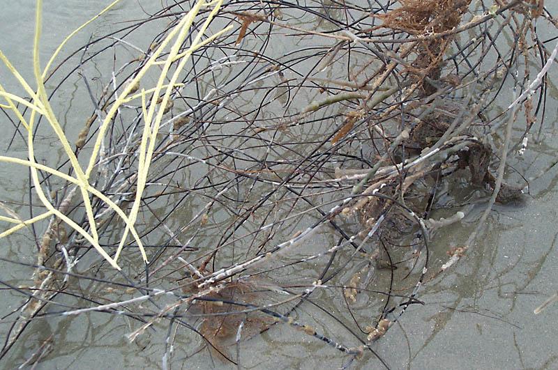 seaweed_003